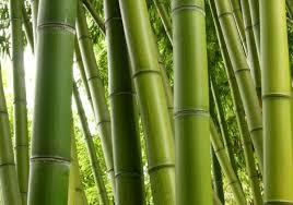 pflanzen sämereien zwiebeln bambus sichtschutz im garten