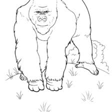 Wild Animals Coloring Pages 9 Kids Printables