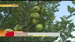 Best Apple Hill Pumpkin Patch by Apple Hill High Hill Ranch Youtube