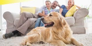 Dog Urine Hardwood Floors Stain by Hardwood Floors And Dogs Furniture Wax U0026 Polish The Furniture