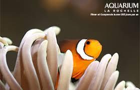 accès horaires aquarium la rochelle site officiel
