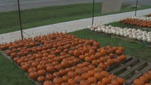 Hurricane Utah Pumpkin Patch by Plan To Ease Congestion On Us 79 In Round Rock Includes Additional