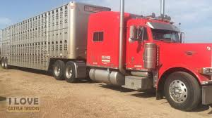 100 Cattle Truck Loading Cattle In Archer City Texas YouTube