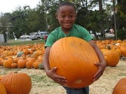Pumpkin Patch In Colorado Springs Co 2013 by 36 Best Pumpkin Patches Images On Pinterest Farm Houses Tourism