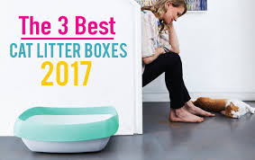 best cat litter boxes 3 best cat litter boxes 2017 the cheapest fanciest best overall