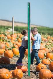 Mission Valley Pumpkin Patch by Pumpkin Patch Ripe For Picking U2013 Orange County Register