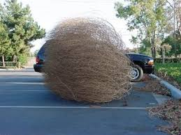Tumbleweed Christmas Tree Pictures by Tumbling Tumbleweeds Life And Other Matters