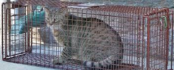 live cat trap trap rental purrfect pals