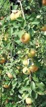 Best Pumpkin Apple Picking Long Island Ny by 6 Hudson Valley Orchards Where You Can Pick Your Own Apples