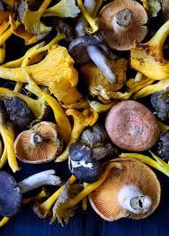 Smashing Pumpkins Snail by Vegan Pumpkin Pasta Sauce With Wild Mushrooms Cilantro And