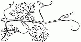 Vine Clipart Black And White Pencil And In Color Vine Clipart with Pumpkin Vine Clipart