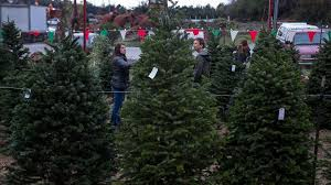 Christmas Tree Hill Shops Lancaster Pa by Weny News Expert Best Christmas Tree Has Nice Scent Springy