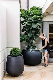 pflanzkübel erst im richtigen pflanzgefäß zeigen pflanzen