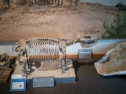 Ashfall Fossil Beds State Historical Park by Gift Shop And The Beginning Picture Of Ashfall Fossil Beds State