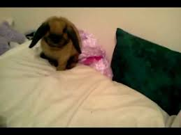 My Dog Pees On My Bed by My Baby Bunny Peed On My Bed Youtube