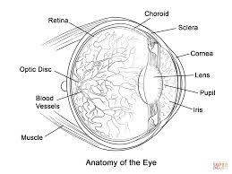 Click The Human Eye Anatomy Coloring