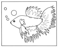 Betta Fish 4 85x11 Coloring Page