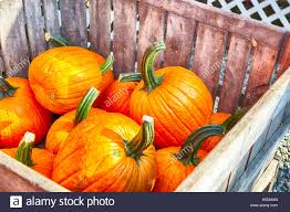 Pumpkin Picking Nj by Vegetable Farm And New Jersey Stock Photos U0026 Vegetable Farm And