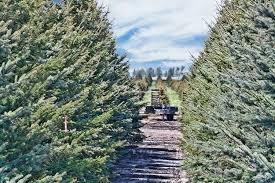Eustis Christmas Tree Farm by Omaha Area Christmas Tree Farms O U0027daniel Honda Omaha