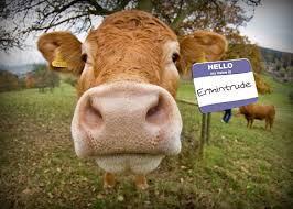 nom le plus porte en saviez vous qu une vache qui porte un nom donne plus de lait qu