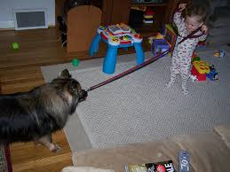Dogs That Dont Shed Keeshond by The Best Family Dogs U2013 10 Breeds For Homes With Children Dog