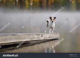 Cute Jack Russell Terrier Dog On Stock Photo 574920391 - Shutterstock Jack Russell Gracie Sold To Chris Dearmon Snow Creek 1813 Best Triers Images On Pinterest 743 Russell Long Haired Jack Trier Puppies For Sale In Kent Google The Russellcolbath Historic Homestead Site The White Mountains New Hampshire Kancamagus Highway Northern England Villages Cute Trier Dog On Stock Photo 574920391 Shutterstock Farm Photos Images Alamy Male Teacup Chihuajack Russellix Lantern Pictures Jackhua 1588
