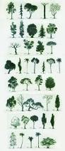What Kind Of Trees Are Christmas Trees by Best 25 Tree Art Ideas On Pinterest Drawing Techniques Trees