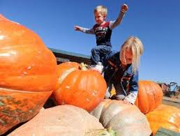 Pumpkin Patch Littleton Co by Boulder Area Pumpkin Patches Haunted Houses And Other Fall