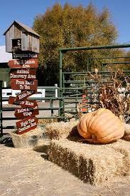 Peter Pumpkin Patch Petaluma by Petaluma Marin Mommies