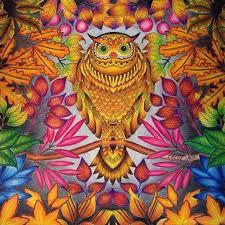 Garden Owl Johanna Basford Secret Prismacolor Coloring Books Chameleon Tags Gardens Instagram Tropical