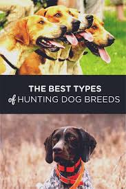 Springer Spaniel Shed Hunting by The Best Types Of Hunting Dog Breeds Brave Hunters