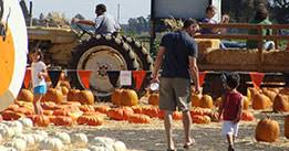 Pick Of The Patch Pumpkins Santa Clara by Spina Farms Pumpkin Patch In San Jose Ca Spina Farms