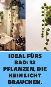 ideal fürs bad 12 pflanzen die kaum sonnenlicht brauchen