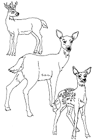 Unique Deer Coloring Page 55 In Seasonal Colouring Pages With