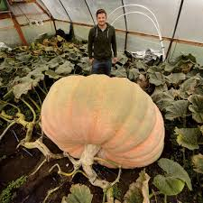 Pumpkin Patch Killeen Tx by Utah Pumpkin Growing Champion Tries To Beat His Own Record