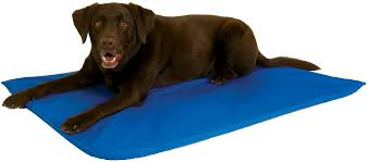 Chewproof Dog Bed by K U0026h Pet Products Cool Bed Iii Dog Bed Blue Large Chewy Com