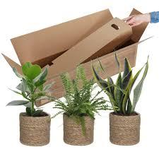 kaufen sie jetzt zimmerpflanze 3x schlafzimmerpflanzen