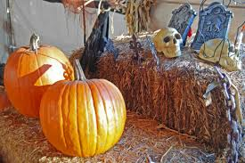 Daves Pumpkin Patch by Lots Of Chances For Scary Good Halloween Fun In Santa Barbara