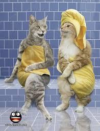 القطط المشاكسة images?q=tbn:ANd9GcR