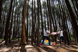 Beberapa Spot Asyik Yang Instagramable Di Tempat Wisata Hutan