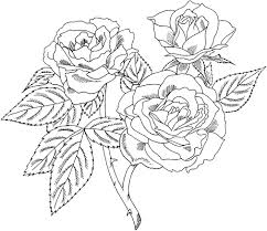 Roses Coloring Pages Printable