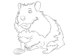 Click To See Printable Version Of Cute Hamster Coloring Page Categories Hamsters