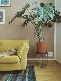 spotted die lieblingspflanze monstera auf instagram sense