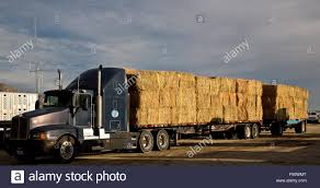 Hay Truck Stock Photos & Hay Truck Stock Images - Alamy Hay Truck Stock Photos Images Alamy My 63 Chevy Hauling Hay Trucks Hay Hauler Loading Time Lapse Youtube Gmc Diesel Dairyland Co 24 Truck And Trailer In Flickr Australian Trucking On Twitter The Volvotrucks Ata Safety 5jp Ranch Life Page 6 Delivering To Market At Tenerir The Atlas Mountains Pinterest Overloaded In West Coast Of Turkey Image Farm With Family Help Men Riding Full
