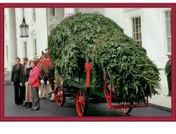 Fraser Christmas Tree Care by Home Mistletoe Meadows