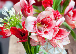 flowers flower bulbs memorable flower bulbs on sale cheap