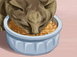 Siberian Cat Hair Shedding by How To Care For A Siberian Cat 9 Steps With Pictures Wikihow