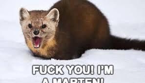 Its Not A Weasel Fuck You Im Marten Meme Involves My