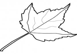 Maple Leaf Coloring Page Free Printable Pages For Pictures