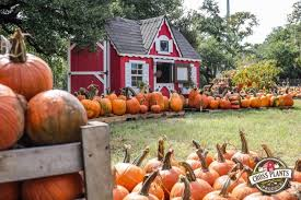 Nearby Pumpkin Patches by Pumpkin Patch Grand Opening In Kyle 365 Things To Do In Austin Tx